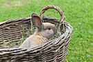 Holiday on Perhinig Farm - Rabbit